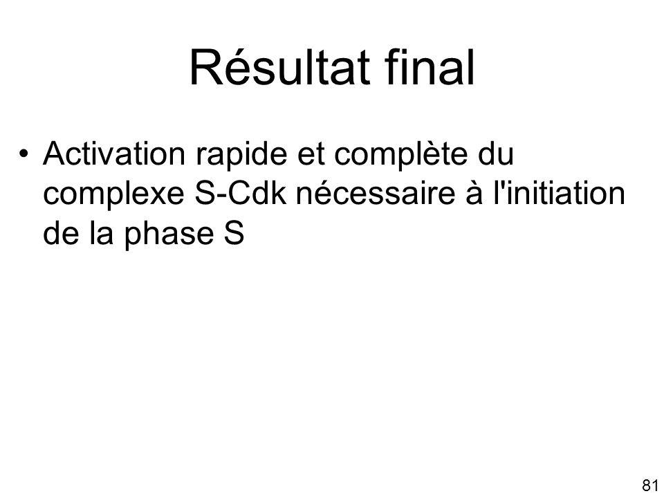 81 Résultat final Activation rapide et complète du complexe S-Cdk nécessaire à l'initiation de la phase S