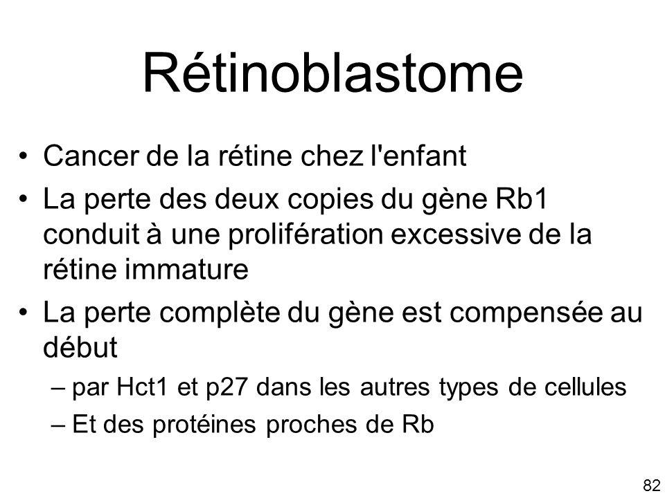 82 Rétinoblastome Cancer de la rétine chez l'enfant La perte des deux copies du gène Rb1 conduit à une prolifération excessive de la rétine immature L