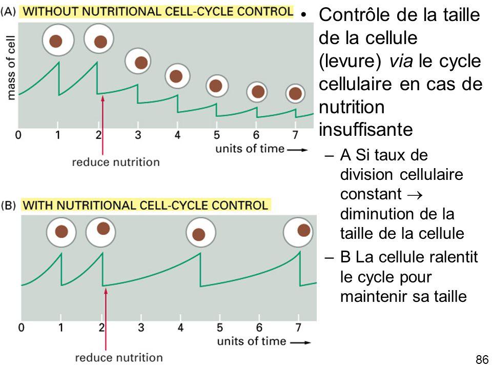 86 Fig 17-31 Contrôle de la taille de la cellule (levure) via le cycle cellulaire en cas de nutrition insuffisante –A Si taux de division cellulaire c