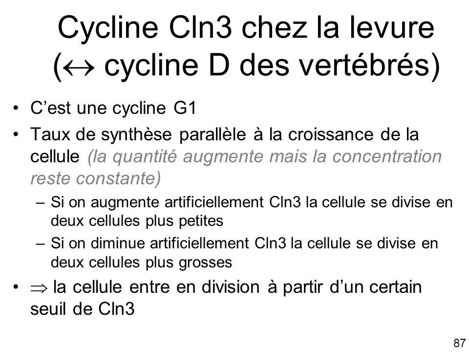 87 Cycline Cln3 chez la levure ( cycline D des vertébrés) Cest une cycline G1 Taux de synthèse parallèle à la croissance de la cellule (la quantité au