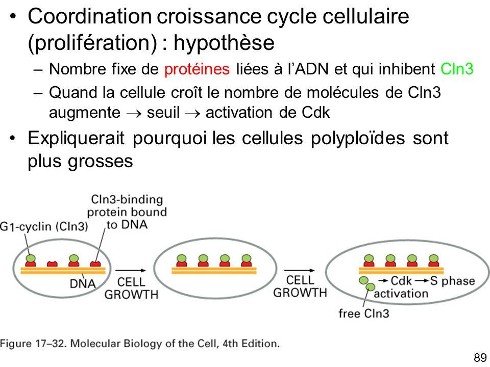 89 Fig 17-32 Coordination croissance cycle cellulaire (prolifération) : hypothèse –Nombre fixe de protéines liées à lADN et qui inhibent Cln3 –Quand l