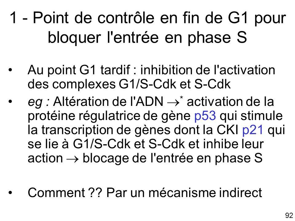 92 1 - Point de contrôle en fin de G1 pour bloquer l'entrée en phase S Au point G1 tardif : inhibition de l'activation des complexes G1/S-Cdk et S-Cdk