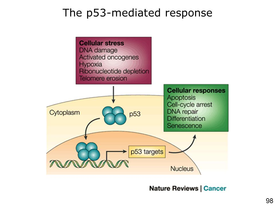 98 Chene,P200 3p102 Nat Rev Cancer Figure 1 | The p53-mediated response.