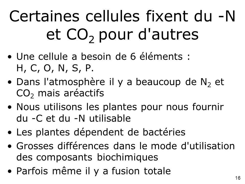 16 Certaines cellules fixent du -N et CO 2 pour d autres Une cellule a besoin de 6 éléments : H, C, O, N, S, P.