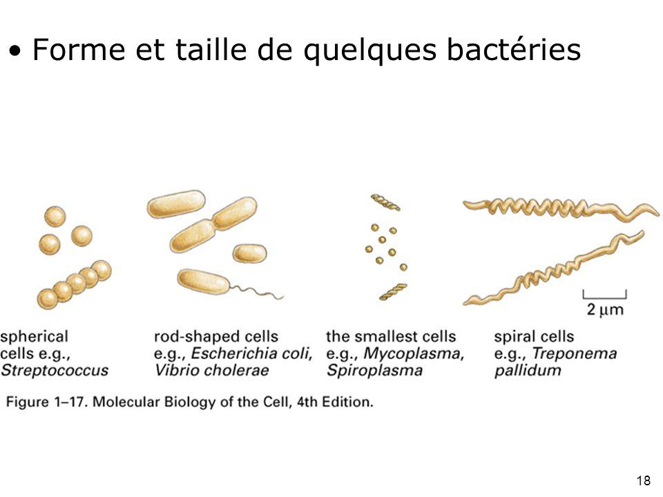 18 Fig 1-17 Forme et taille de quelques bactéries