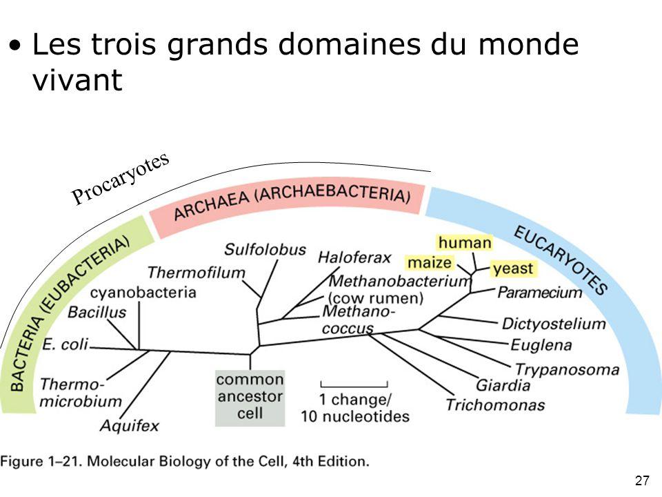 27 Fig 1-21 Les trois grands domaines du monde vivant Procaryotes