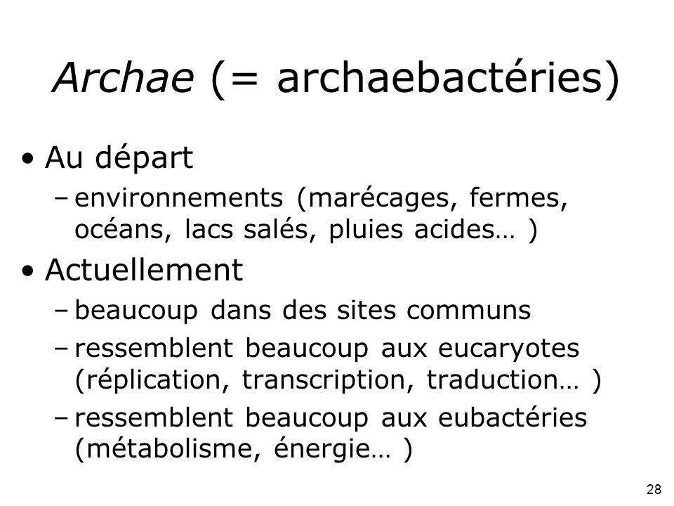 28 Archae (= archaebactéries) Au départ –environnements (marécages, fermes, océans, lacs salés, pluies acides… ) Actuellement –beaucoup dans des sites communs –ressemblent beaucoup aux eucaryotes (réplication, transcription, traduction… ) –ressemblent beaucoup aux eubactéries (métabolisme, énergie… )