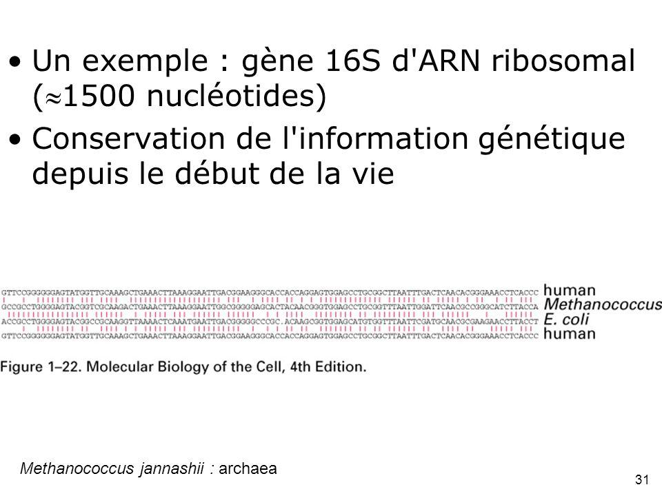 31 Fig 1-22 Un exemple : gène 16S d ARN ribosomal (1500 nucléotides) Conservation de l information génétique depuis le début de la vie Methanococcus jannashii : archaea