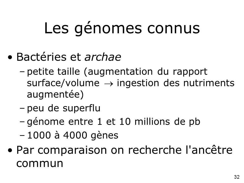 32 Les génomes connus Bactéries et archae –petite taille (augmentation du rapport surface/volume ingestion des nutriments augmentée) –peu de superflu –génome entre 1 et 10 millions de pb –1000 à 4000 gènes Par comparaison on recherche l ancêtre commun