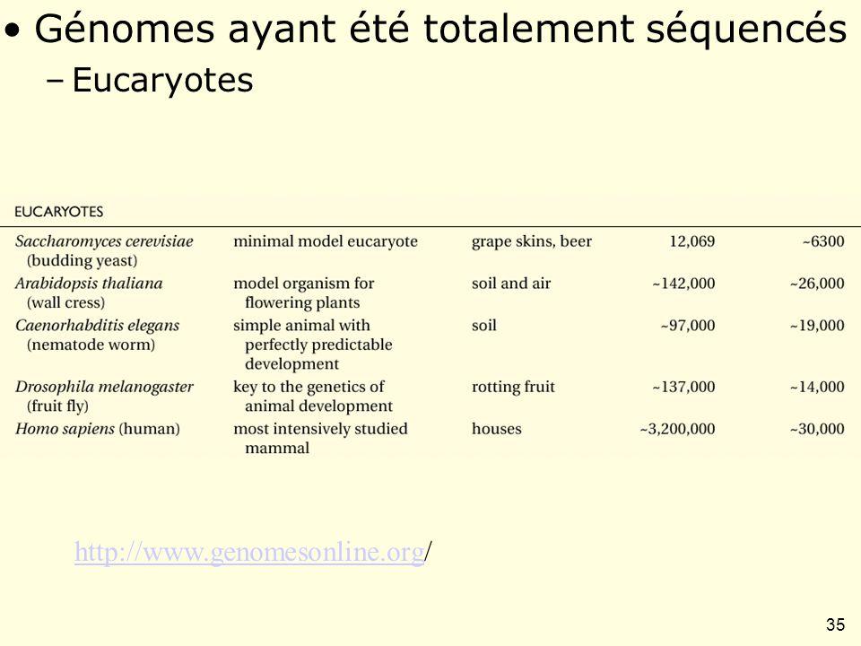 35 Table I-1 Génomes ayant été totalement séquencés –Eucaryotes http://www.genomesonline.orghttp://www.genomesonline.org/