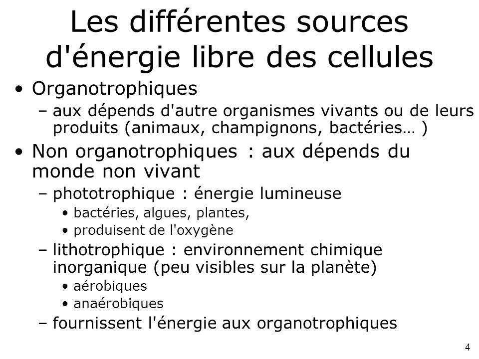 4 Les différentes sources d énergie libre des cellules Organotrophiques –aux dépends d autre organismes vivants ou de leurs produits (animaux, champignons, bactéries… ) Non organotrophiques : aux dépends du monde non vivant –phototrophique : énergie lumineuse bactéries, algues, plantes, produisent de l oxygène –lithotrophique : environnement chimique inorganique (peu visibles sur la planète) aérobiques anaérobiques –fournissent l énergie aux organotrophiques
