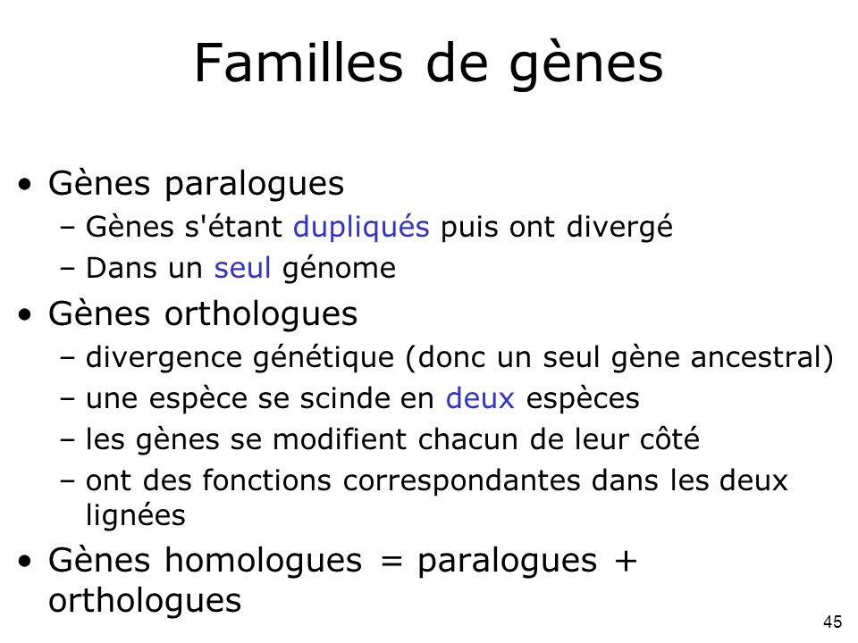 45 Familles de gènes Gènes paralogues –Gènes s étant dupliqués puis ont divergé –Dans un seul génome Gènes orthologues –divergence génétique (donc un seul gène ancestral) –une espèce se scinde en deux espèces –les gènes se modifient chacun de leur côté –ont des fonctions correspondantes dans les deux lignées Gènes homologues = paralogues + orthologues
