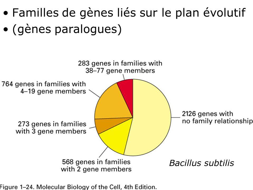 46 Fig 1-24 Familles de gènes liés sur le plan évolutif (gènes paralogues) Bacillus subtilis