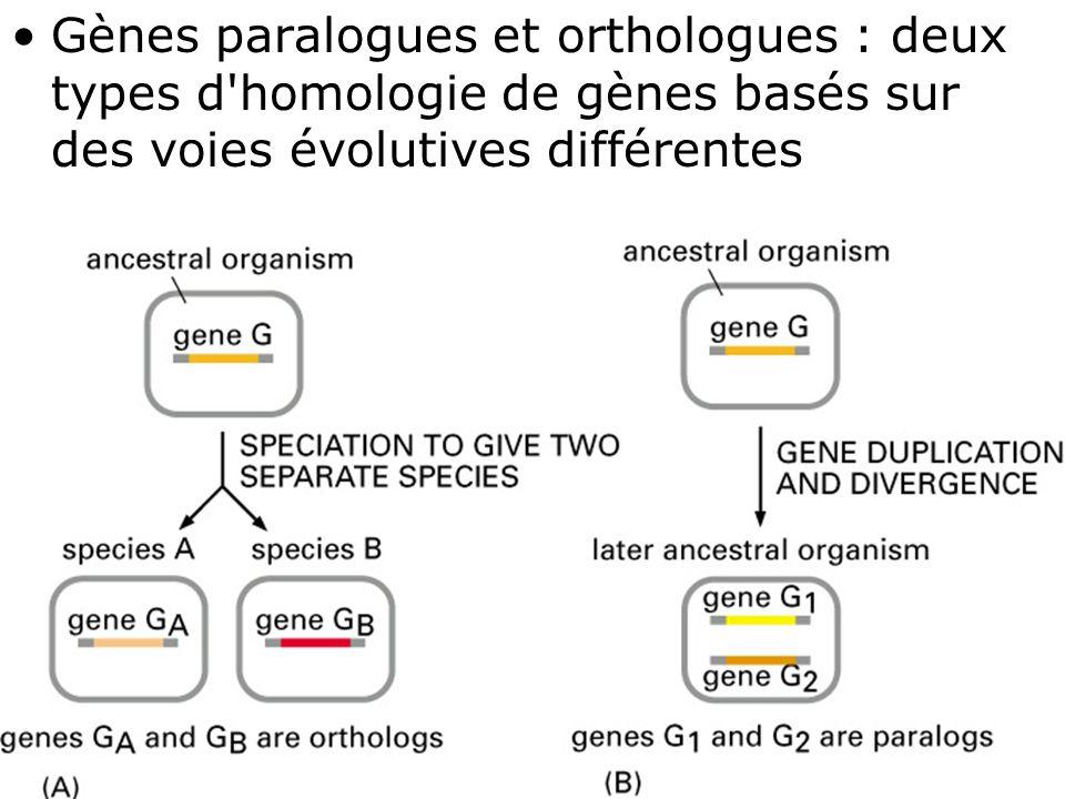 47 Fig 1-25(A-B) Gènes paralogues et orthologues : deux types d homologie de gènes basés sur des voies évolutives différentes
