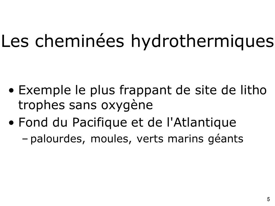 5 Les cheminées hydrothermiques Exemple le plus frappant de site de litho trophes sans oxygène Fond du Pacifique et de l Atlantique –palourdes, moules, verts marins géants