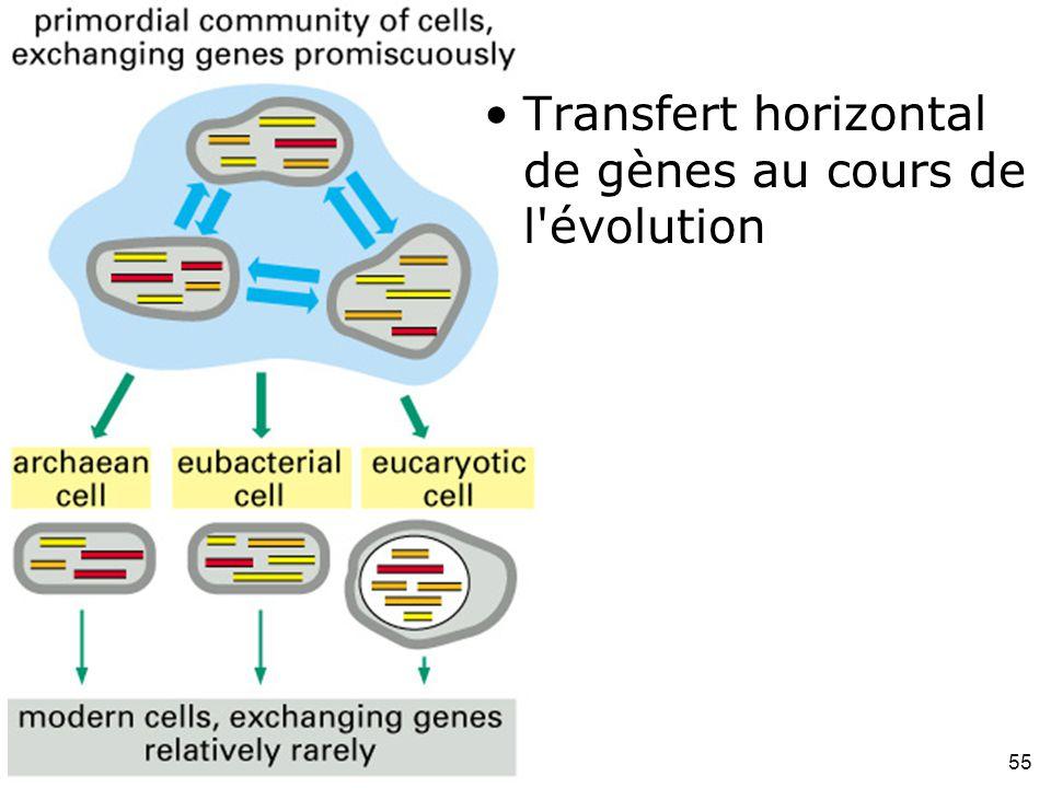 55 Fig 1-28 Transfert horizontal de gènes au cours de l évolution