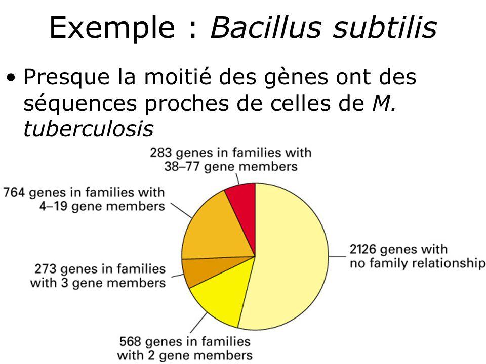 59 Exemple : Bacillus subtilis Presque la moitié des gènes ont des séquences proches de celles de M.
