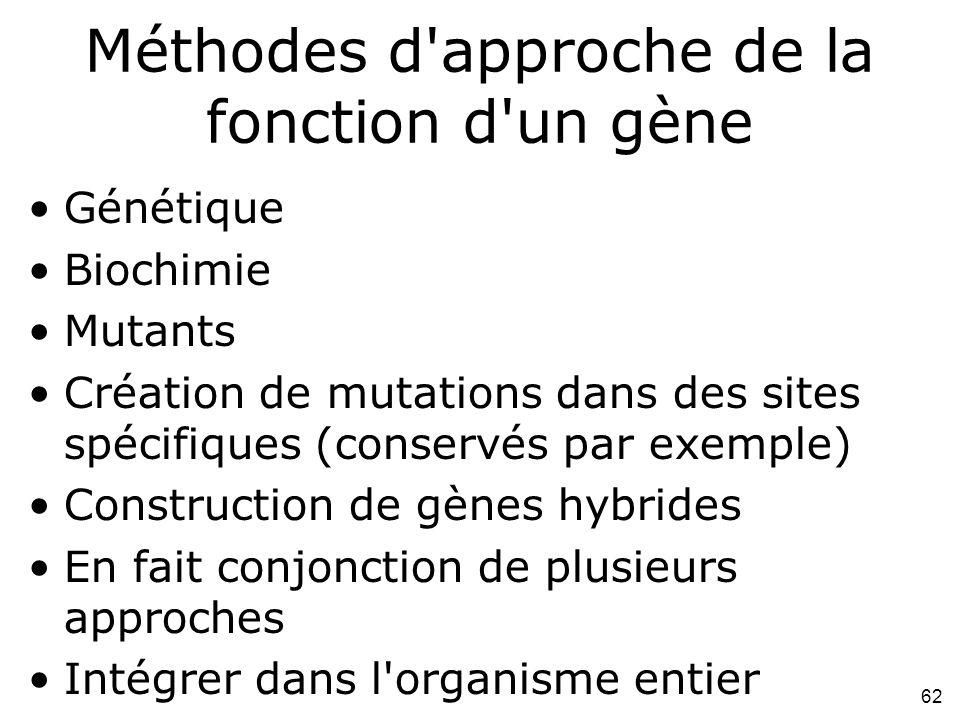 62 Méthodes d approche de la fonction d un gène Génétique Biochimie Mutants Création de mutations dans des sites spécifiques (conservés par exemple) Construction de gènes hybrides En fait conjonction de plusieurs approches Intégrer dans l organisme entier