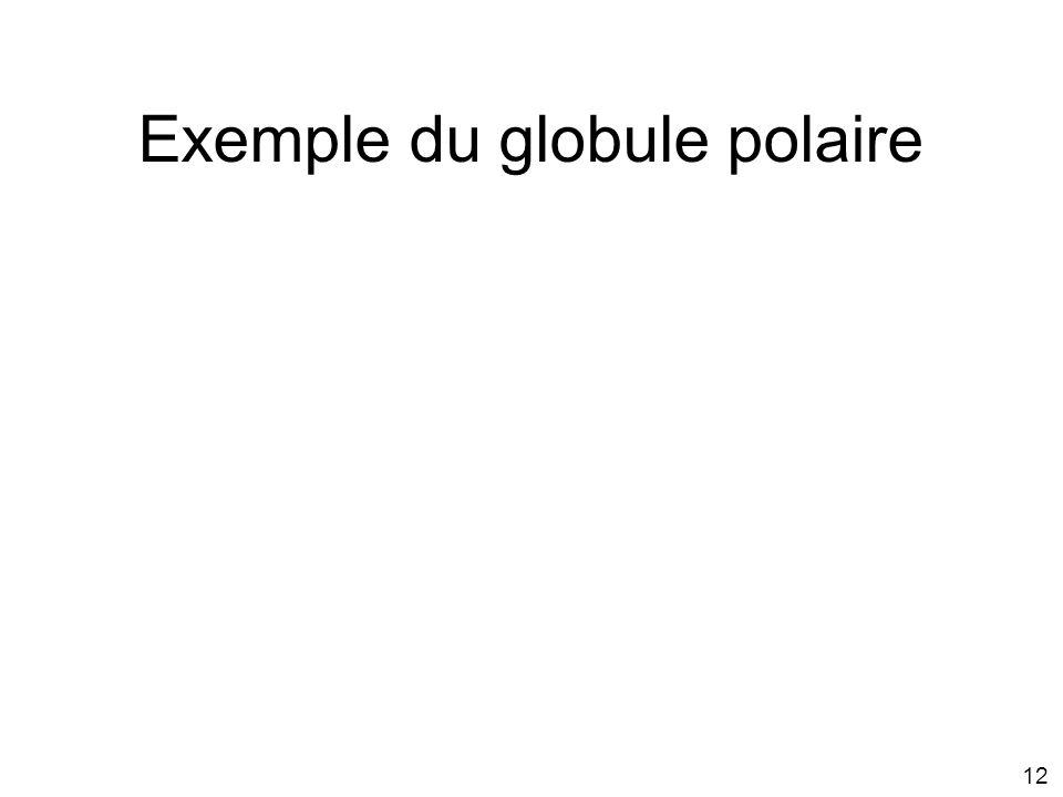 12 Exemple du globule polaire