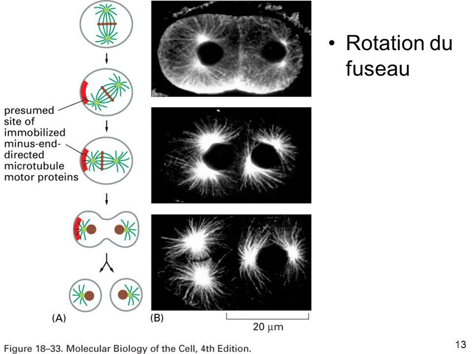 13 Fig 18-33 Rotation du fuseau