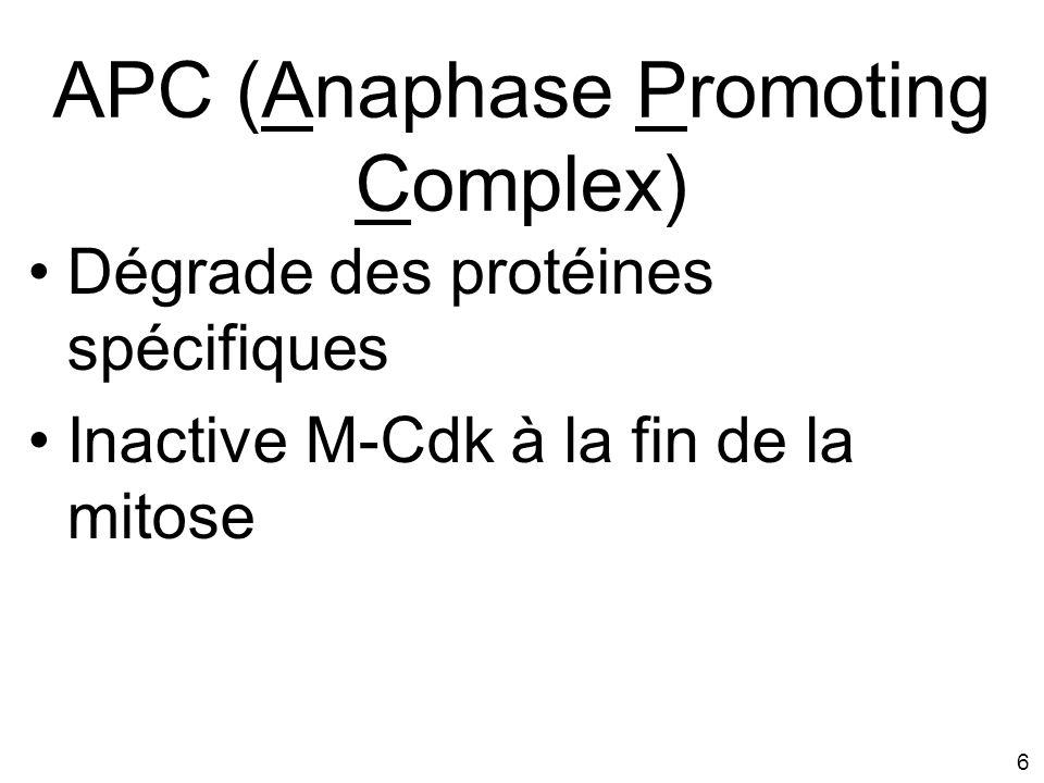 6 APC (Anaphase Promoting Complex) Dégrade des protéines spécifiques Inactive M-Cdk à la fin de la mitose