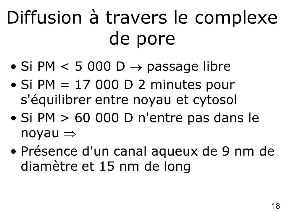 18 Diffusion à travers le complexe de pore Si PM < 5 000 D passage libre Si PM = 17 000 D 2 minutes pour s'équilibrer entre noyau et cytosol Si PM > 6