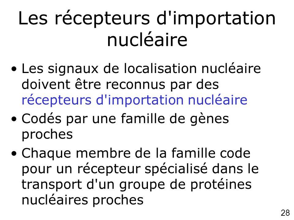 28 Les récepteurs d'importation nucléaire Les signaux de localisation nucléaire doivent être reconnus par des récepteurs d'importation nucléaire Codés