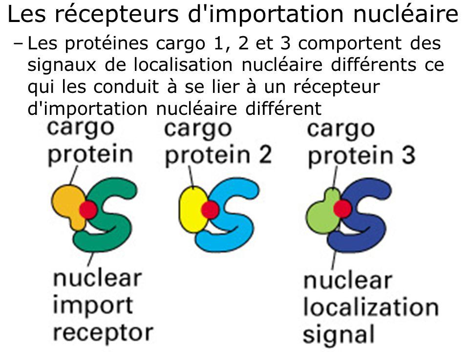 29 Fig 12-14A Les récepteurs d'importation nucléaire –Les protéines cargo 1, 2 et 3 comportent des signaux de localisation nucléaire différents ce qui