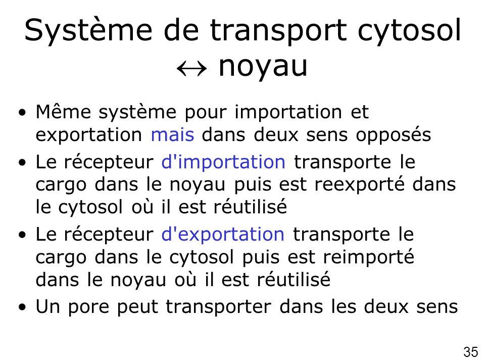 35 Système de transport cytosol noyau Même système pour importation et exportation mais dans deux sens opposés Le récepteur d'importation transporte l