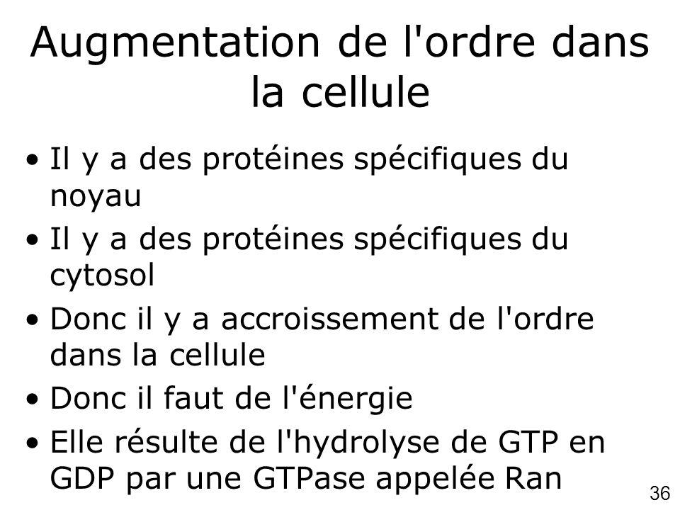 36 Augmentation de l'ordre dans la cellule Il y a des protéines spécifiques du noyau Il y a des protéines spécifiques du cytosol Donc il y a accroisse