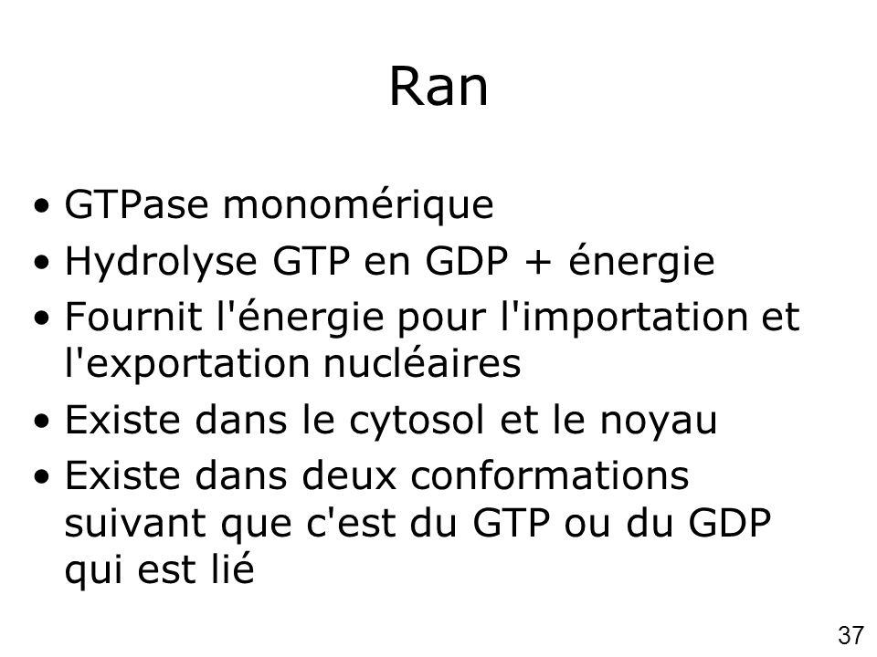 37 Ran GTPase monomérique Hydrolyse GTP en GDP + énergie Fournit l'énergie pour l'importation et l'exportation nucléaires Existe dans le cytosol et le