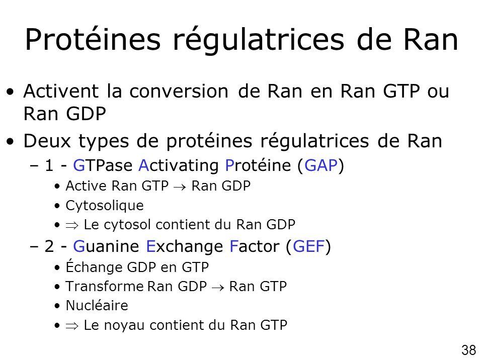 38 Protéines régulatrices de Ran Activent la conversion de Ran en Ran GTP ou Ran GDP Deux types de protéines régulatrices de Ran –1 - GTPase Activatin