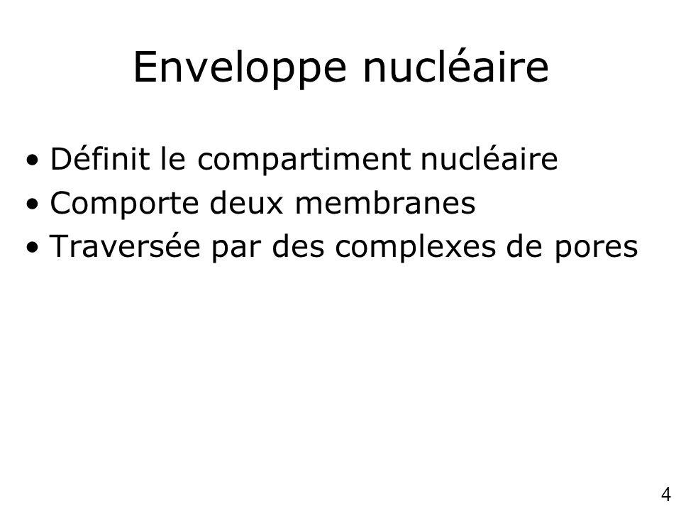 4 Enveloppe nucléaire Définit le compartiment nucléaire Comporte deux membranes Traversée par des complexes de pores