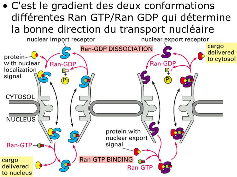 40 Fig 12-16 C'est le gradient des deux conformations différentes Ran GTP/Ran GDP qui détermine la bonne direction du transport nucléaire