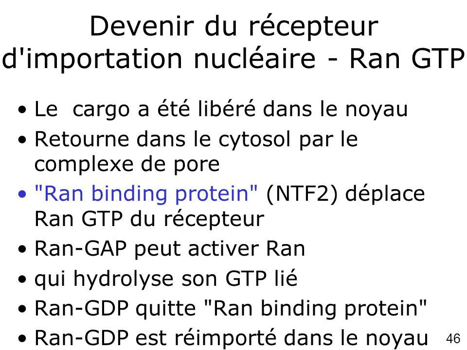 46 Devenir du récepteur d'importation nucléaire - Ran GTP Le cargo a été libéré dans le noyau Retourne dans le cytosol par le complexe de pore