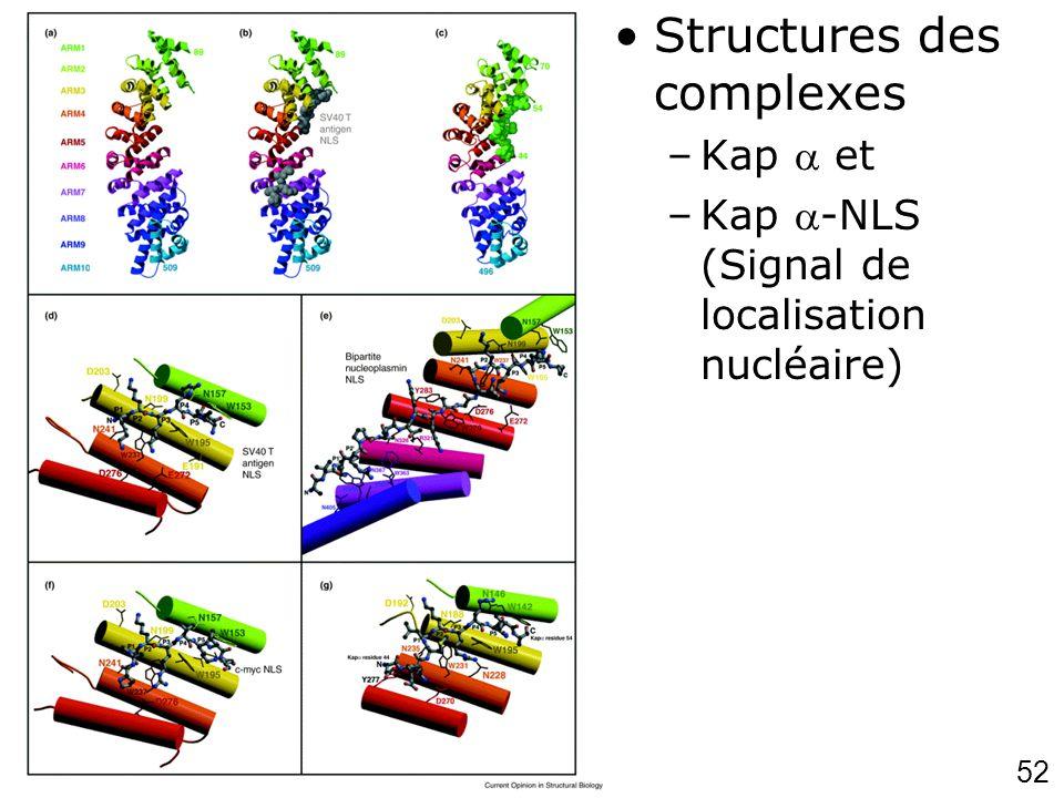 52 Chook,YM200 1p703 (fig2) Structures des complexes –Kap et –Kap -NLS (Signal de localisation nucléaire)