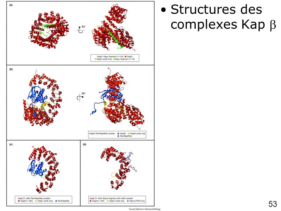 53 Chook,YM2001 p703 (fig3) Structures des complexes Kap