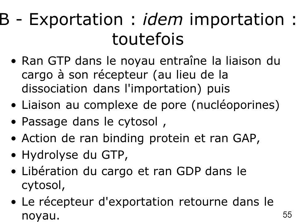 55 B - Exportation : idem importation : toutefois Ran GTP dans le noyau entraîne la liaison du cargo à son récepteur (au lieu de la dissociation dans