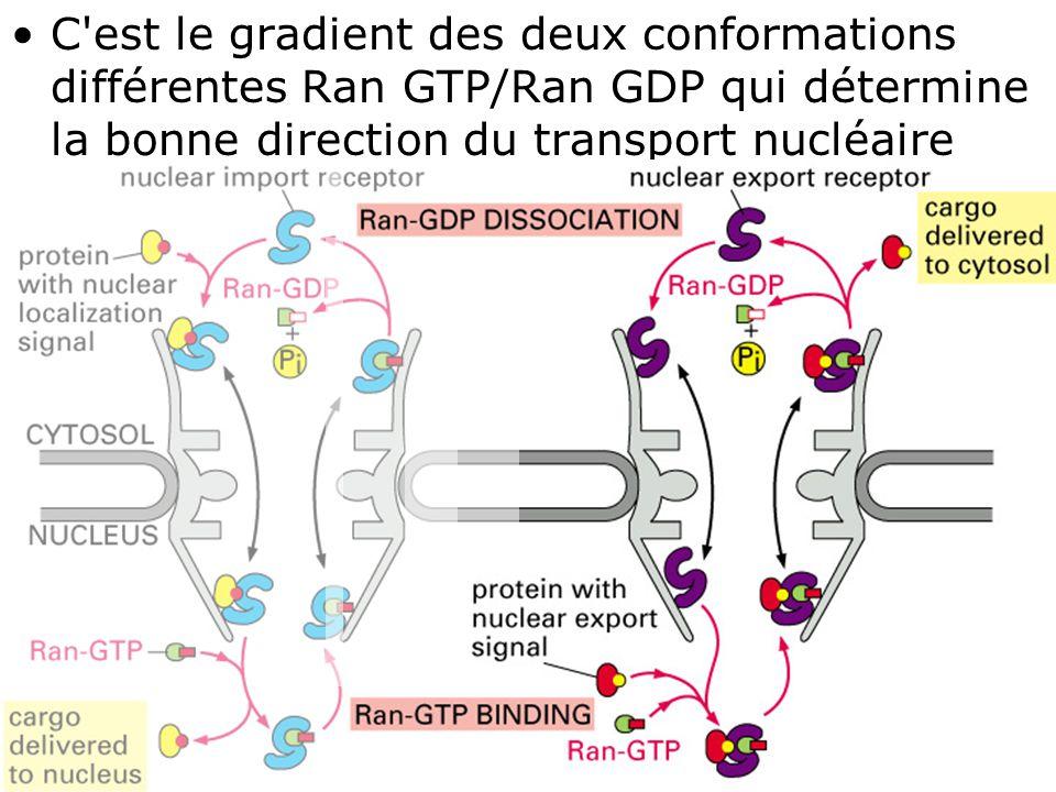 56 Fig 12-16 droite C'est le gradient des deux conformations différentes Ran GTP/Ran GDP qui détermine la bonne direction du transport nucléaire