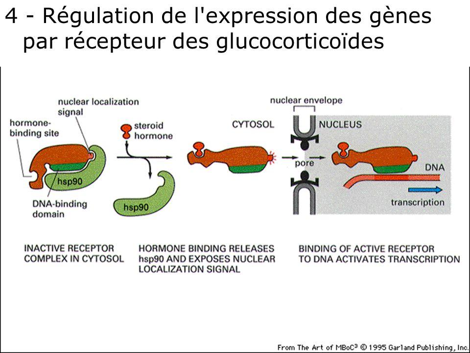 62 Fig 12-19 3 ème édition 4 - Régulation de l'expression des gènes par récepteur des glucocorticoïdes