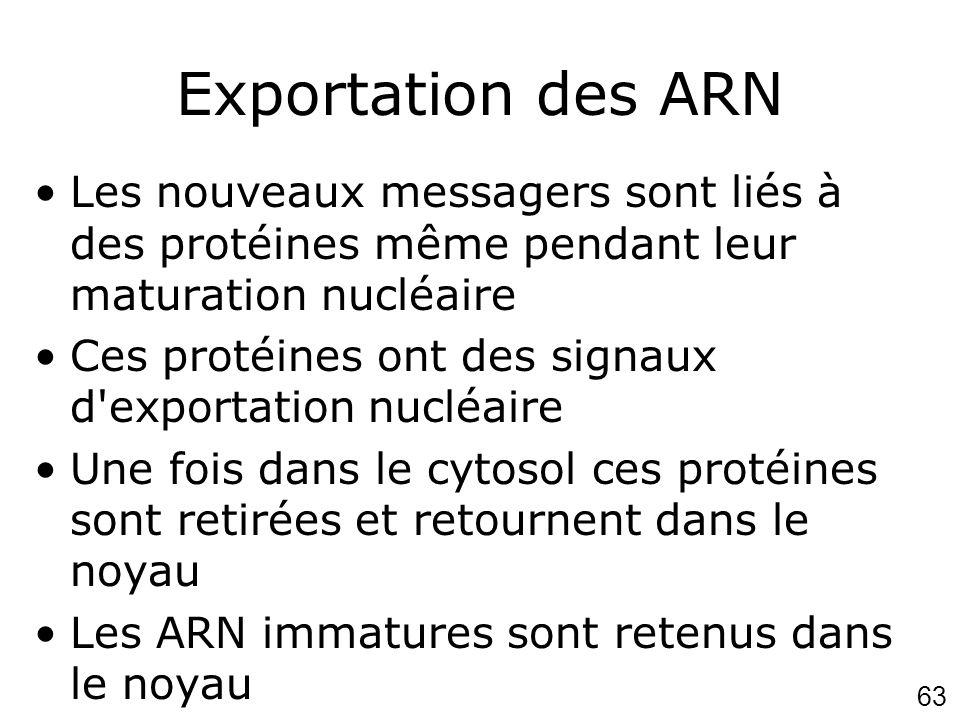 63 Exportation des ARN Les nouveaux messagers sont liés à des protéines même pendant leur maturation nucléaire Ces protéines ont des signaux d'exporta