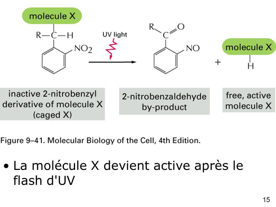 15 Fig 9-41 Caged molecules La molécule X devient active après le flash d'UV