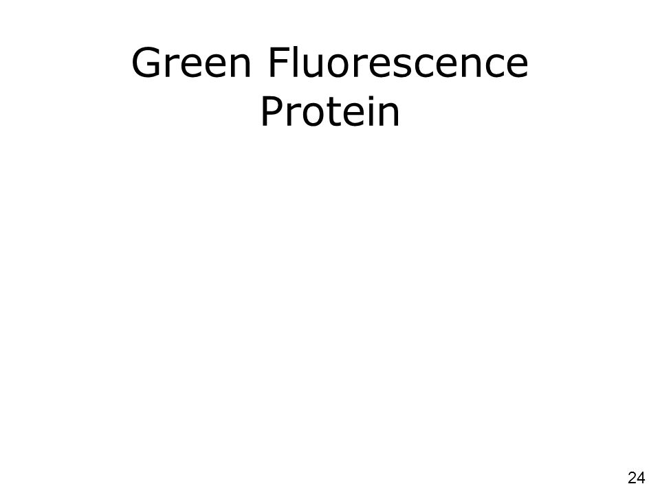 24 Green Fluorescence Protein