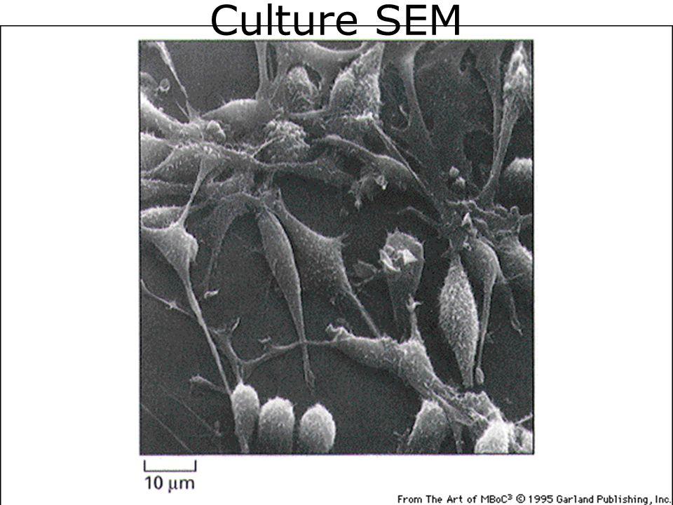 36 Culture SEM