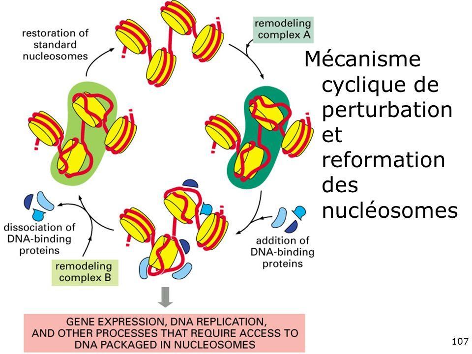 107 Fig 4-34 Mécanisme cyclique de perturbation et reformation des nucléosomes