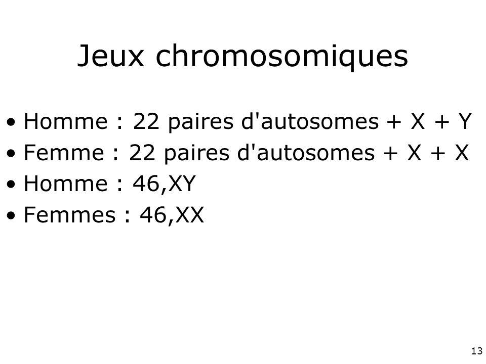 13 Jeux chromosomiques Homme : 22 paires d autosomes + X + Y Femme : 22 paires d autosomes + X + X Homme : 46,XY Femmes : 46,XX