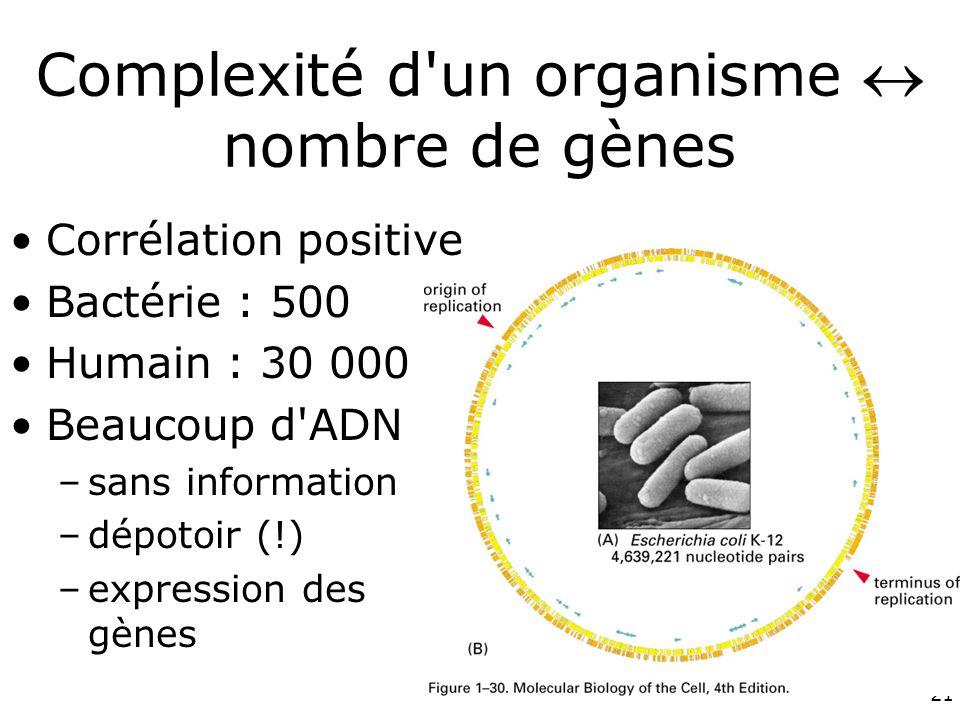 21 Complexité d un organisme nombre de gènes Corrélation positive Bactérie : 500 Humain : 30 000 Beaucoup d ADN –sans information –dépotoir (!) –expression des gènes