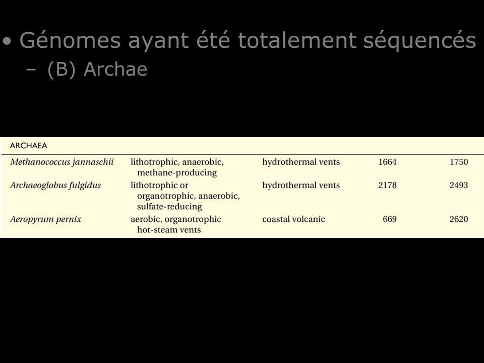 23 Table I-1 Génomes ayant été totalement séquencés – (B) Archae