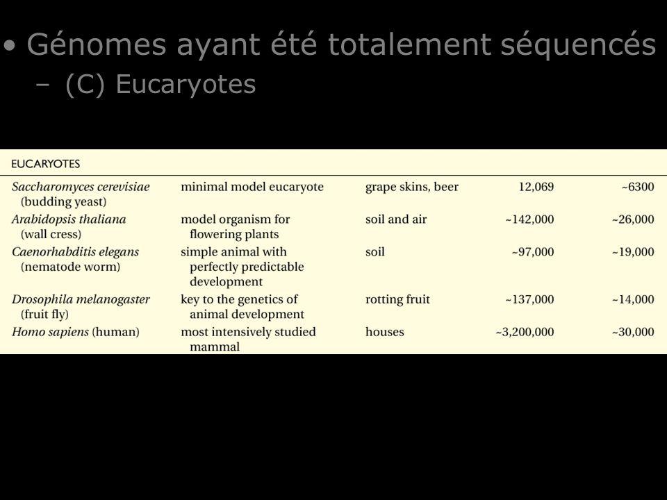 24 Table I-1 Génomes ayant été totalement séquencés – (C) Eucaryotes