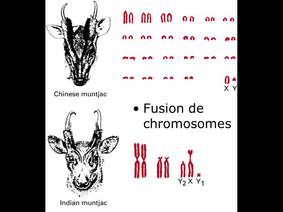 28 Fig 4-14 Fusion de chromosomes